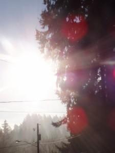 Early Morning Sun Rays #9